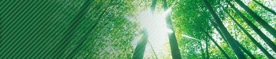 Bamboo sunlight
